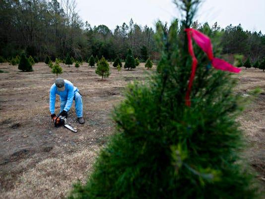 636180715794971237-Christmas-Tree-Farms-Roll.jpg