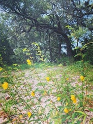 Located east of Gulf Breeze, the Naval Oaks Nature