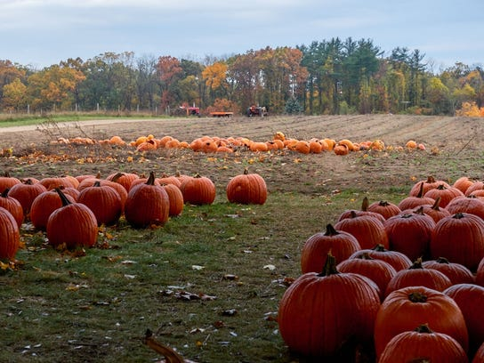 Kalamazoo's many pumpkin patches are ready for exploration in the fall