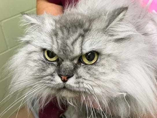 Cats at Dogs & Cats Forever have purr-sonality-plus -- come meet them and choose a kitty that fits yours!