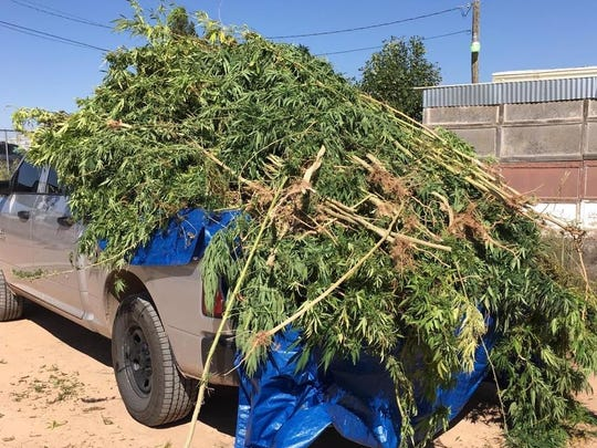 Otero County Sheriff's Office deputies seized 130 marijuana plants from a 61-year-old Chaparral woman's home .