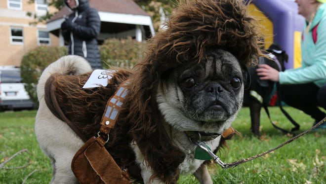 A pug dressed as Chewbacca competes in the dog costume contest on the Indianola Square in 2017.