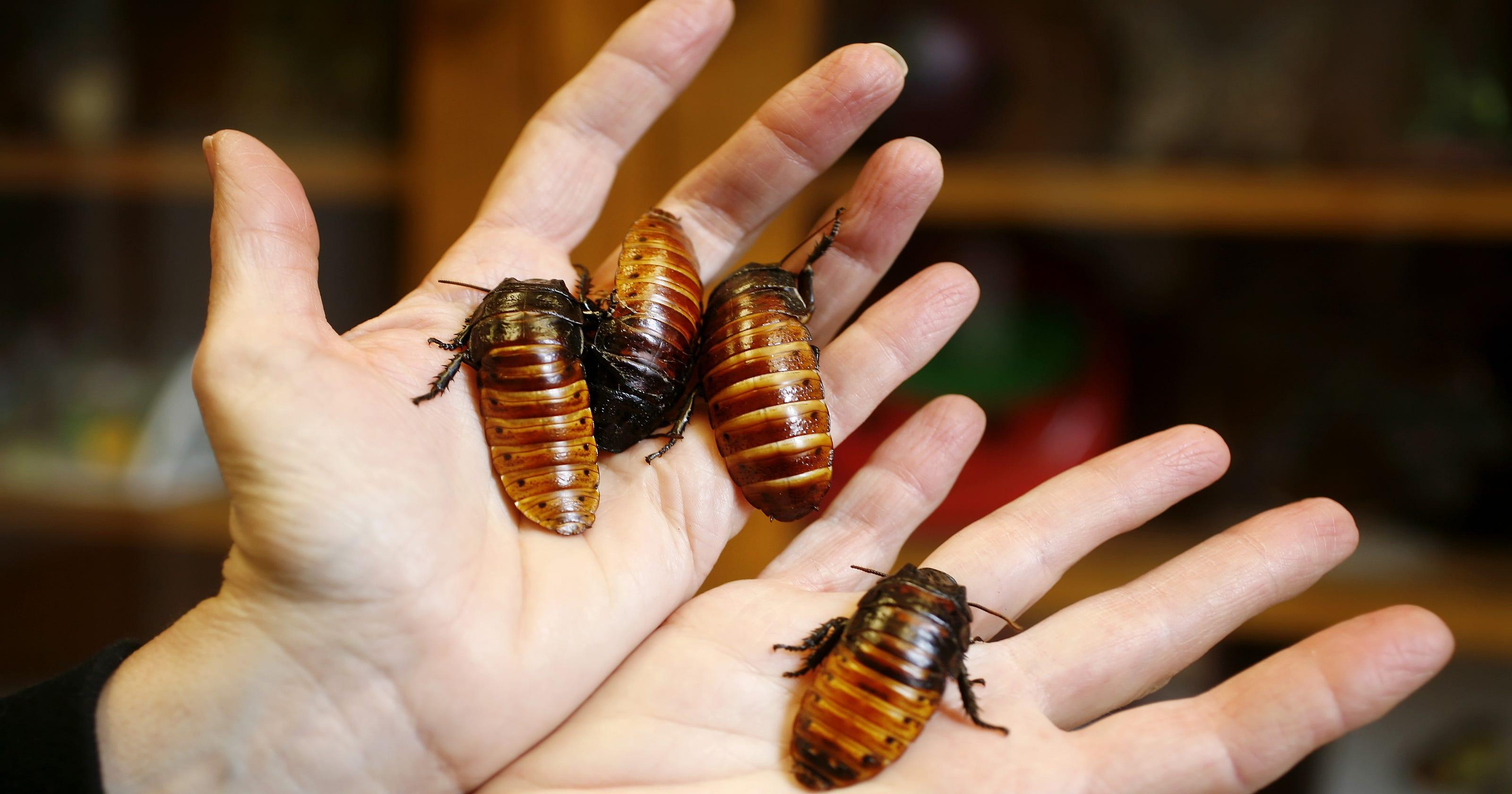 نتيجة بحث الصور عن Eat cockroaches