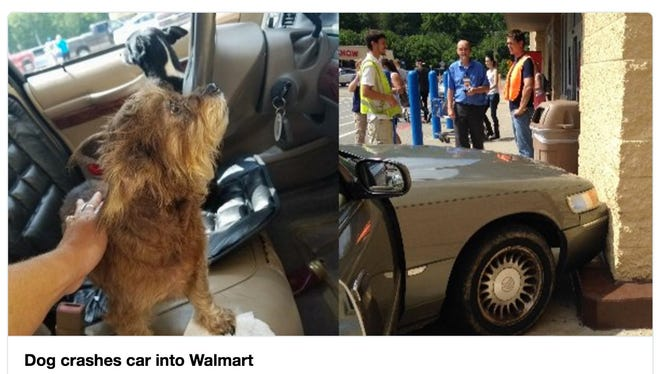 The dogs who crashed their owners car into a West Virginia Walmart are depicted in a tweet published by station WSAZ.