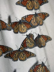 Monarchs await tagging and release at the St. Marks