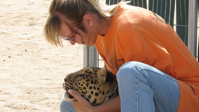 Volunteers at The Magic Jungle offer a lifetime home for exotic cats in Lucerne Valley. The Magic Jungle, a nonprofit animal rescue located in Lucerne Valley. The animal rescue, which has an office in Palm Springs, is fighting the state of California over inspection fees.