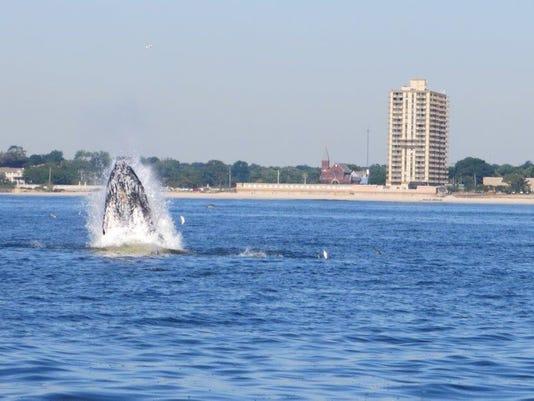 whales deal.jpg