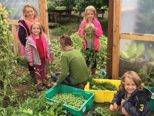 The Newsom kids help with the harvest at the family-owned