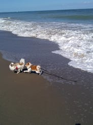 Leo and doggie friend play at the beach.