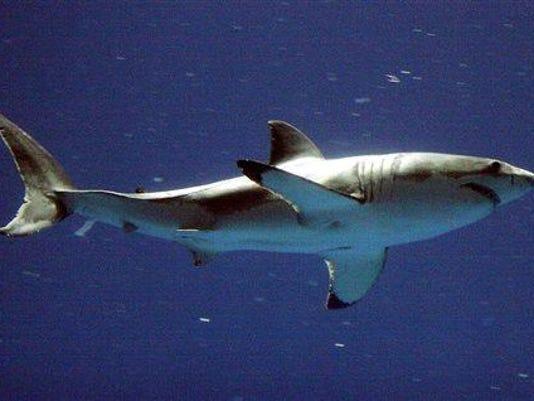 Shark Attacks Study