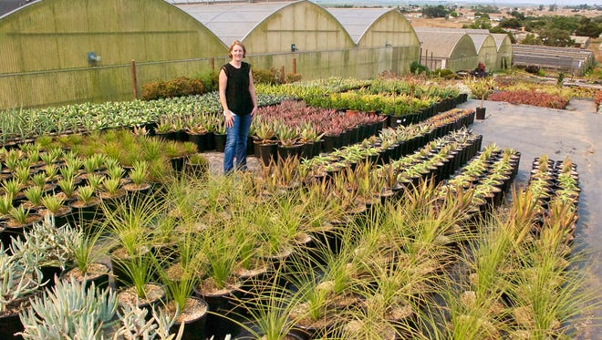 Megan Rodkin, owner of Succulent Gardens in Elkhorn, stands among some of the varieties of succulents at the business on Elkhorn Road.