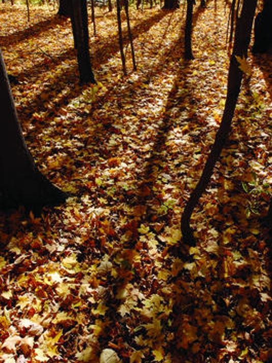 BHM leaves