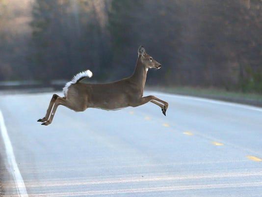 file-- deer in road