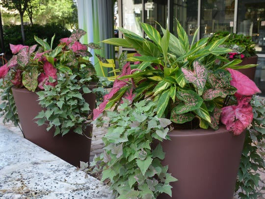 Variegation is used with panache in these containers