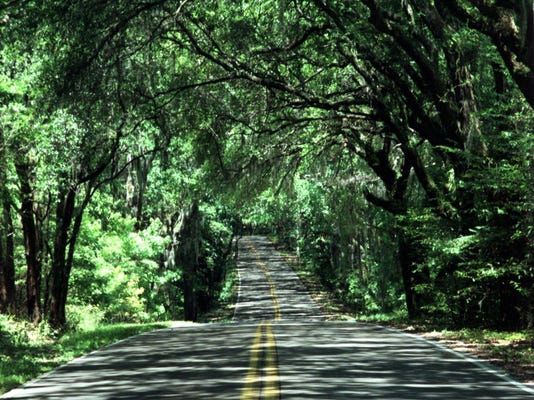 IMG_IMG_Canopy_Road_.JPG_1_1_Q6AVFHF8.jpg_20150603.jpg