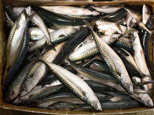 Fish Oil Asthma