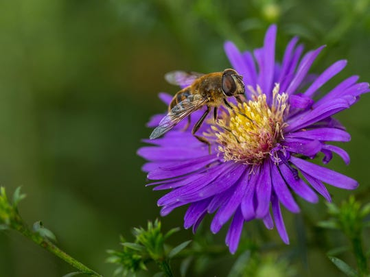 How to make your garden bee-friendly