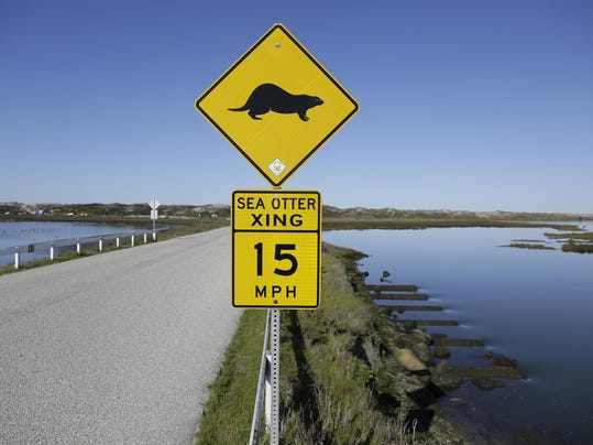 Sea Otters Comeback Challenge
