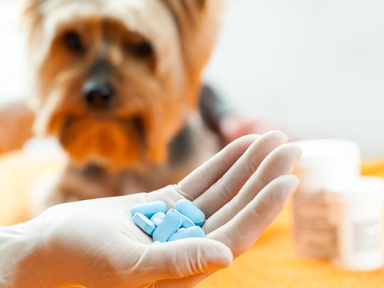 Pets and pills don't mix: Top 10 medications vets get called about