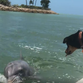 Only in Florida: The magical friendship of Lucy the dog and Gus the dolphin