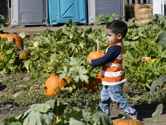 Tulare County residents picked out pumpkins and enjoyed