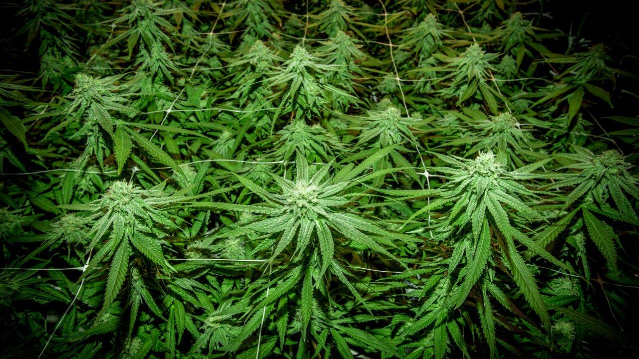 Is medical marijuana coming to South Lebanon Township?