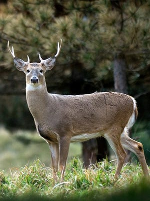 Car-deer crashes typically spike on Nov. 15, the first day of Michigan's firearm deer hunting season.
