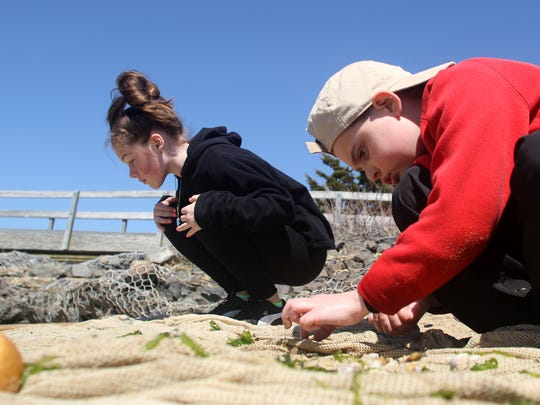 Students search a seine net for marine life during the tour of Sandy Hook given by the New Jersey Sea Grant Consortium in 2011. The program would be cut under the proposed federal budget.