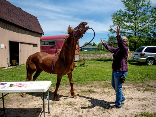 Nancy Bailey prompts her horse Clifford to mimic the