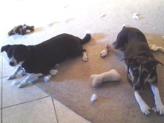 0830-ynit-dog-trainer-salriotoydismembered.jpg