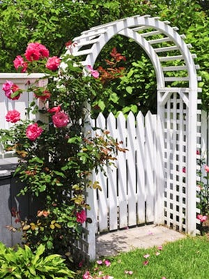 Design a welcoming entrance to your garden with a romantic archway and pots of climbing roses.
