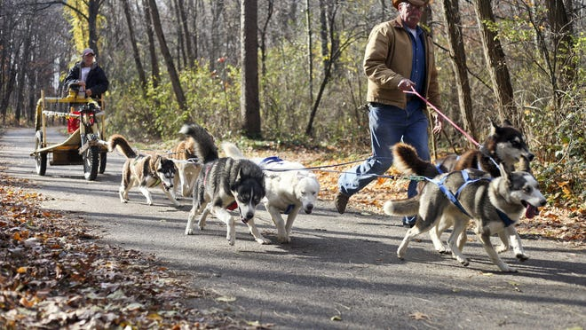Al Fritzler leads a team of dogs and his wife Katie Fritzler onto the trails of Fort Custer State park on Wednesday, Nov. 11, 2015 near Kalamazoo, Mich. Mid-Union Sled Haulers, M.U.S.H, members venture to the park to practice rig training, or dog sledding.