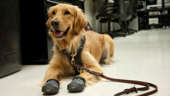 Fallon, the new Arizona Department of Public Safety dog.