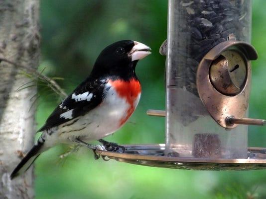 636402310163855187-AAP-0923-bird-seed.jpg
