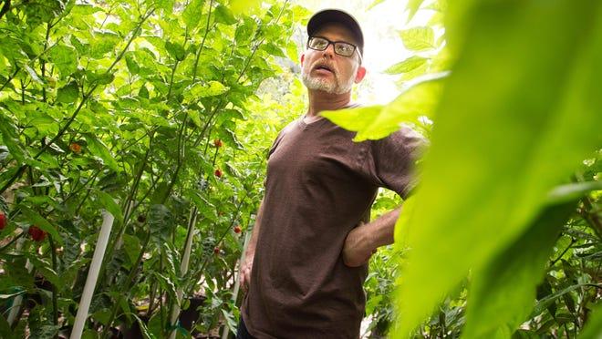Troy Primeaux looks over his pepper plants growing in his backyard in Lafayette.