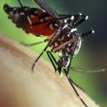 Mosquitoes are back this summer with a vengeance.