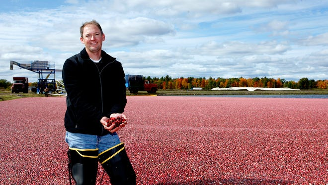 Ed Grygleski holds cranberries in a marsh during a recent harvest. He is a third-generation Wisconsin cranberry grower and president of the family-owned Valley Corp. cranberry growing operation near Tomah.