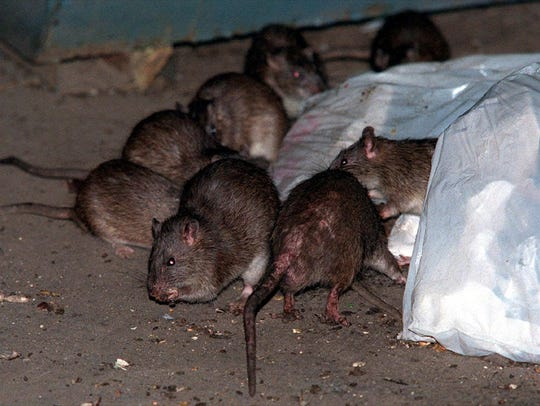Orkin ranks America's 20 rattiest cities.