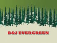 Tree from B & J Evergreen–Clear Lake