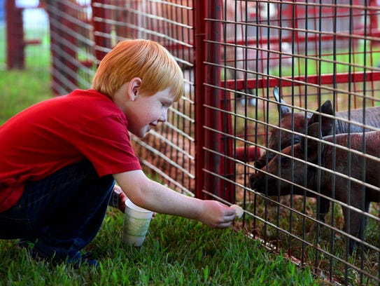 Brody Swallows feeds a few pigs inside of the petting