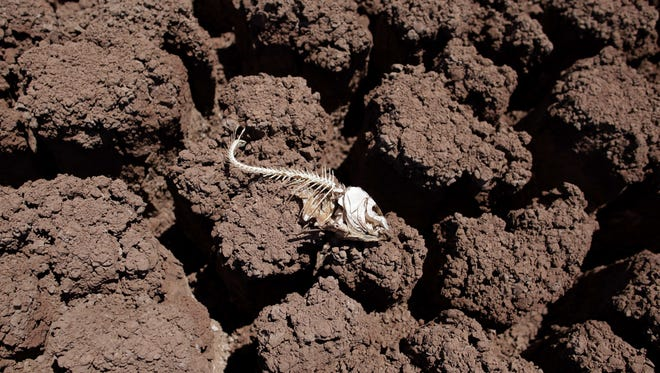 In this Aug. 11, 2011 file photo, the remains of a fish lies on the dried bed of Lake Colorado City near Colorado City, Texas. during the second-most severe drought in state history. According to an Associated Press statistical analysis of 30 years of weather, ice, fire, ocean, biological and other data, every single one of the 344 climate divisions in the Lower 48 states _ NOAA groupings of counties with similar weather _ has warmed significantly, as has each of 188 cities examined.