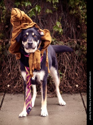 Head to Library Park later this month for the Harry Potter pet walk.