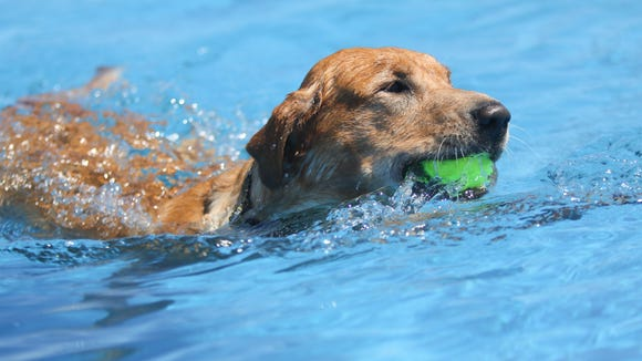 A dog fetches his tennis ball. Three women and their dogs were picked to go an adventure of a lifetime together.