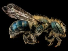 Stone: A rainbow of bees