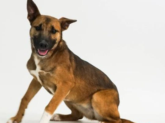 I'm Dakota, a 1 year old female shepherd mix. I love people but I am not good with other pets. If you have room for just one in your home, please consider me.