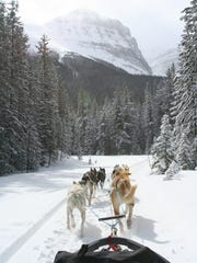 Dogsledding in the Canadian Rockies.