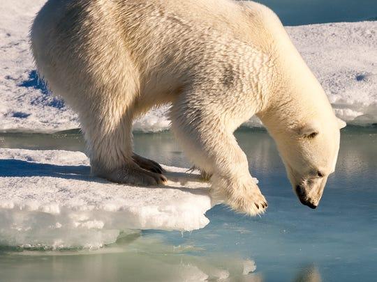 polar-bear-climate-change-square.jpg