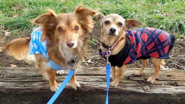 Cecil (left) and Penny are looking for a home where they can stay together. They are brother and sister, 2 years old.