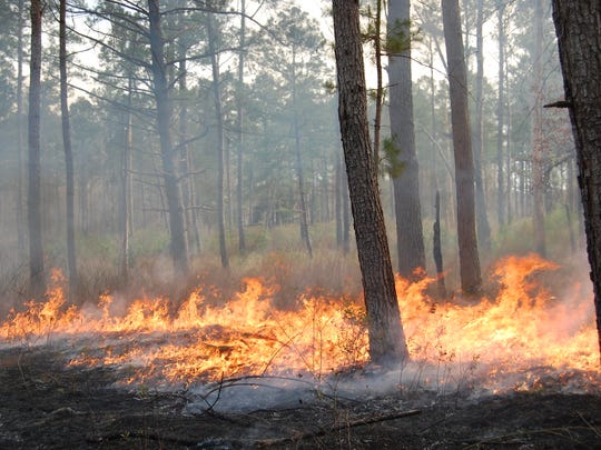 Drier conditions have led to the threat of more wild fires.