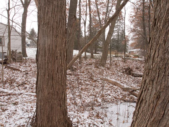 A marshy area behind the house owned by Sheryl James